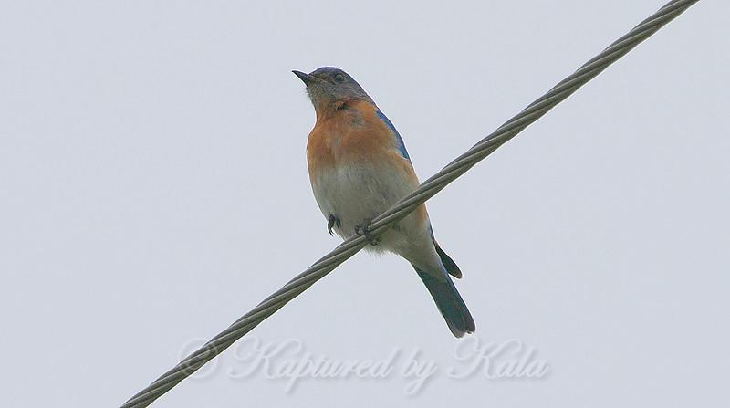 Bluebird Above My Head