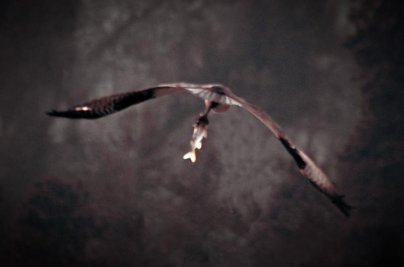 Bird in a Blur