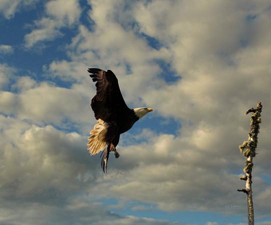 Eagle Arrival 052720