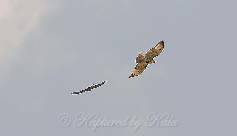 15 The Kite Returns