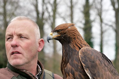 Elvis  the Golden Eagle, looking on with Dave