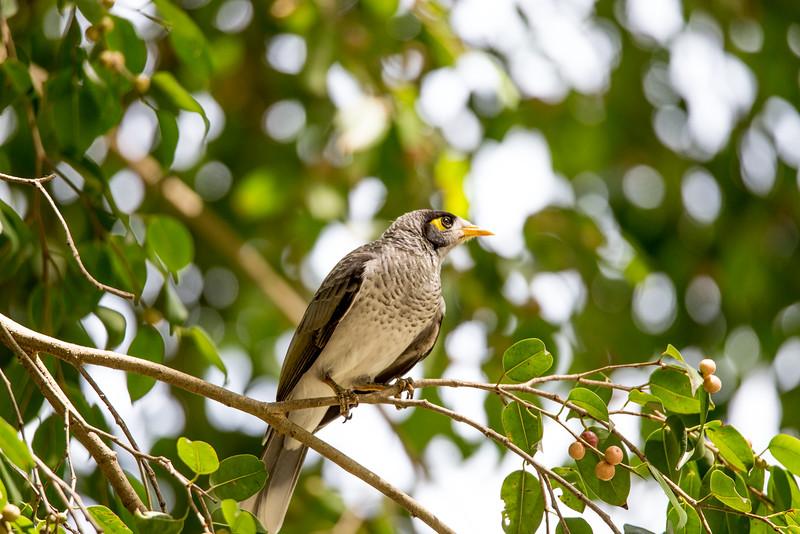 Noisy Minor in Trees