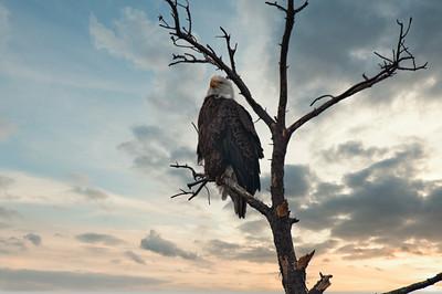 Eagle 1222