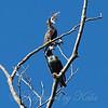 Smart Starlings