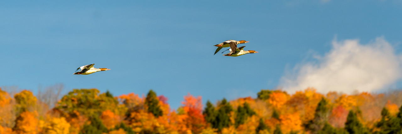 Flying Over Foliage