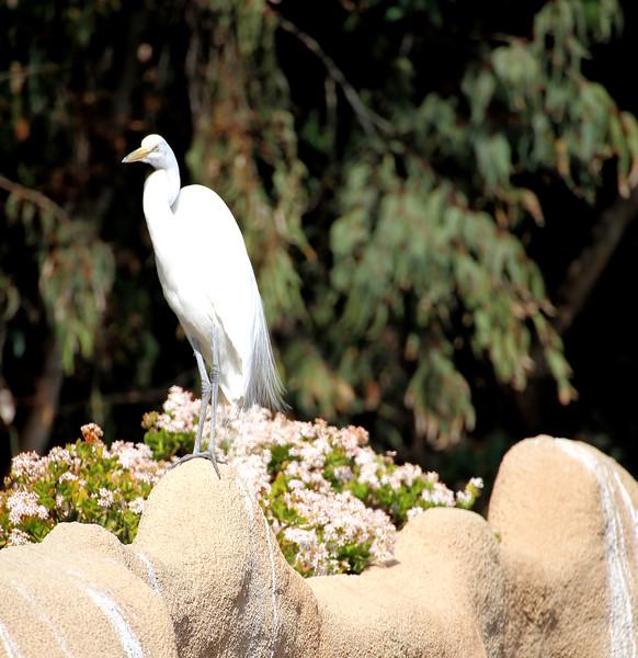 White bird 2.jpg