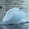 Swan, Purgatory Chasm