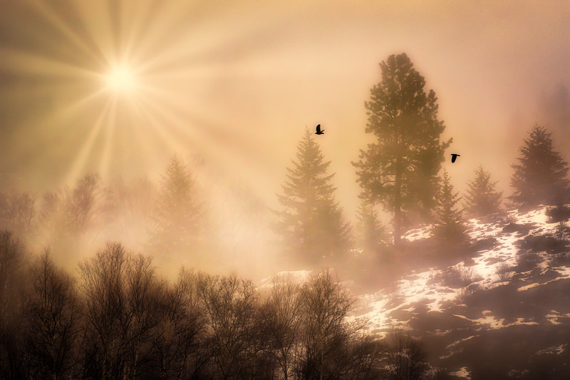 Flight in Golden Rays