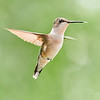 Hummingbird Dancing On Air