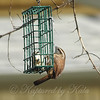 Wrens Like Suet Too