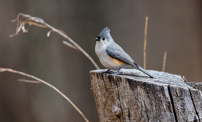 Titmouse Perch