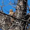 Another Hawk Nest