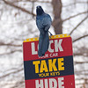 Beware The Evil Grackle