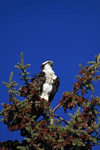 Defending a nest
