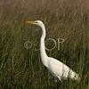 Pictures Of Wildlife 328