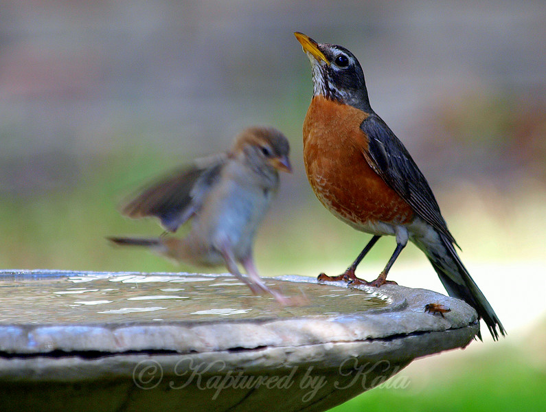 A Robin, A Bee, And A Ghost Sparrow