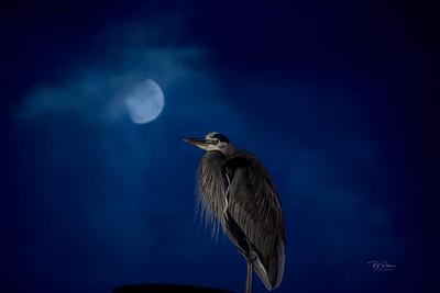 Moon Heron