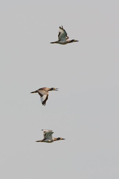 The Broadwater Birds,
