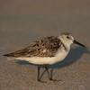 Birds #14