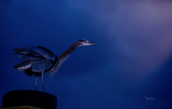 Bue Heron Light