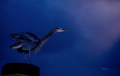 Bue Heron Light