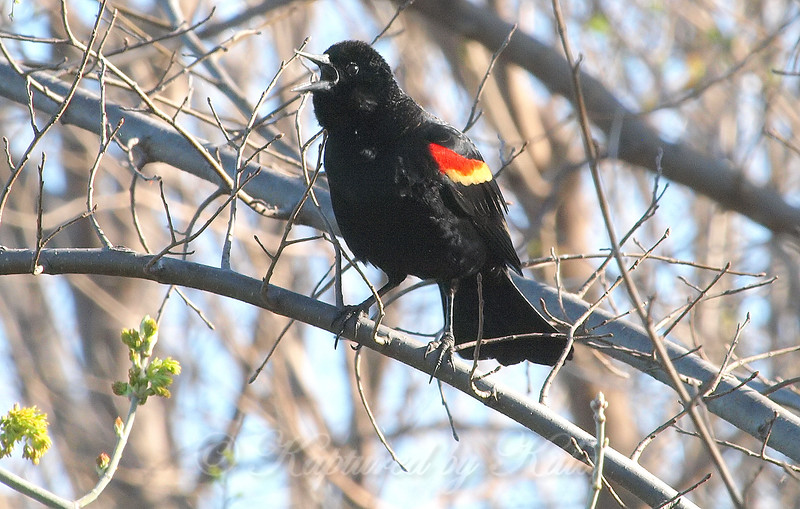 Noisy Bird