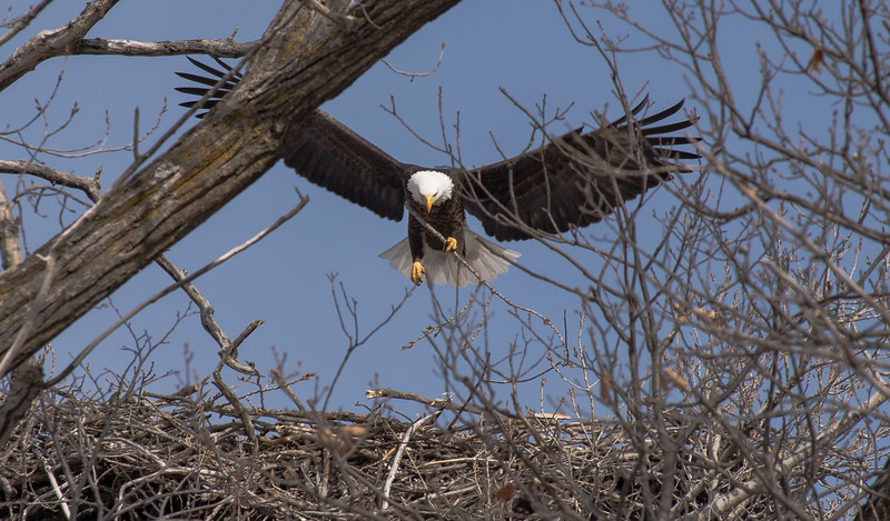 Lake Minnetonka, Grays Bay Eagle Nest