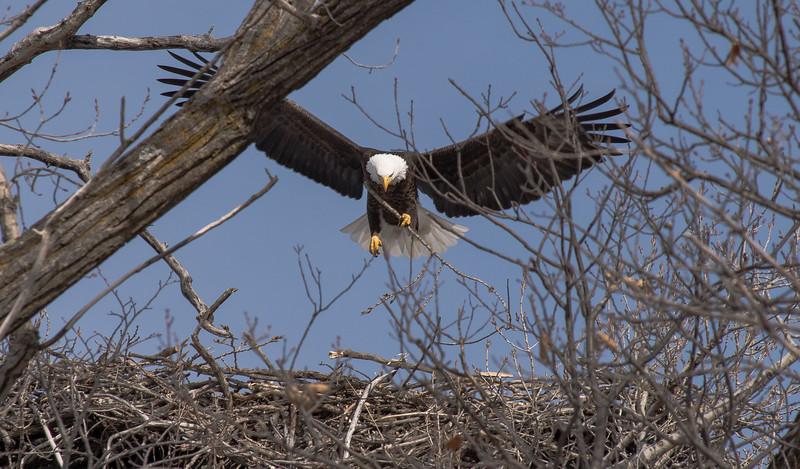 Lake Minnetonka, Grays Bay Eagle Nest