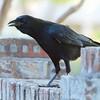 Very Noisy Bird