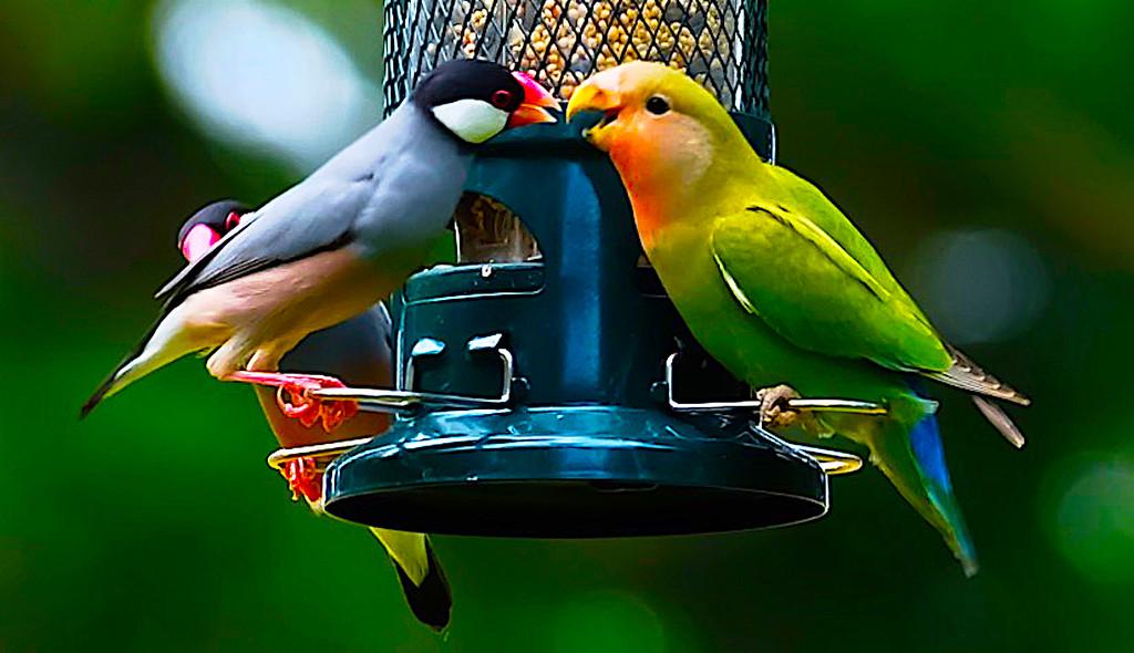 Bird Feeder Gossip