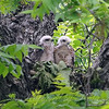 Raptor Siblings View 1