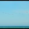 Pelican Line