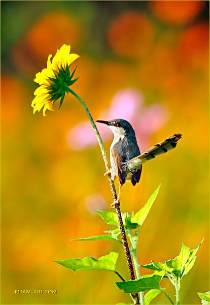 A little bird / Птичка-невеличка
