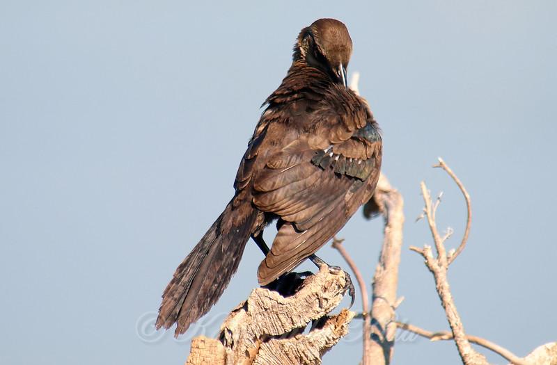 Preening New Feathers