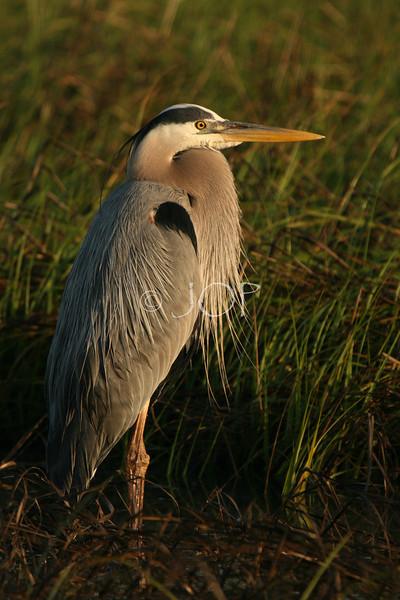 Bird Pics 115