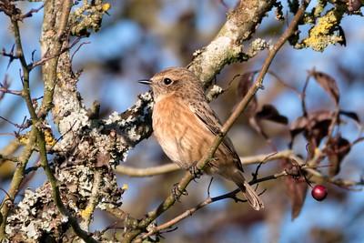 Little Bird Freemans Marsh Hungerford