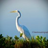 Merritt Island Wetlands