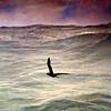 Albatross soaring over big waves