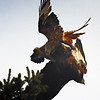 Red Kite Courtship 5