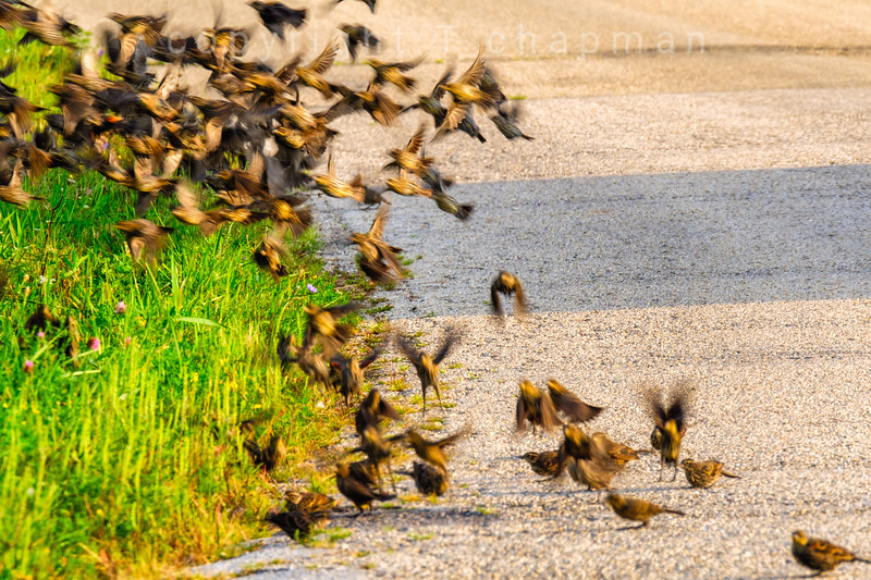 Flock in Motion