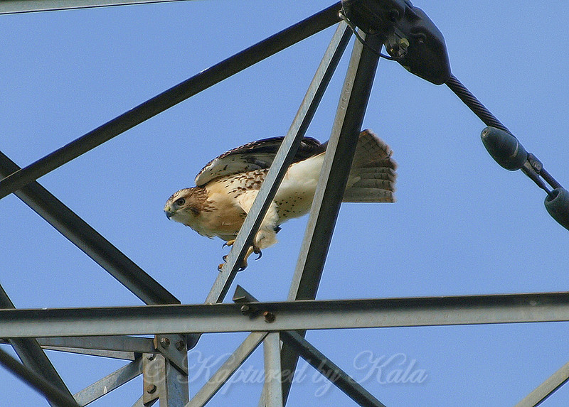 Look What I Found on Top of an Electrical Tower