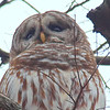 Beautiful Owl Face