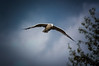 Gull and Stormy Sky