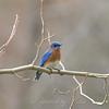 Bluebird of Happiness