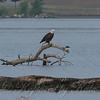 Bald Eagle View 2