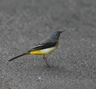 25.2.2011 Madeira, Portugal