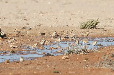 2.3.2020 Western Sahara