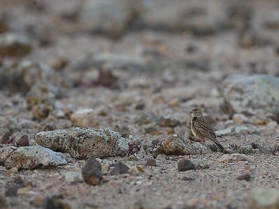 18.3.2014 Fuerteventura, Spain