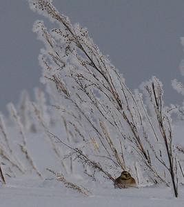 14.2.2010, Vantaa Pitkäsuo, Finland