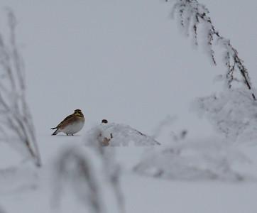 16.1.2010, Vantaa Pitkäsuo, Finland